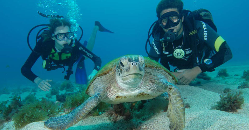 Fernando-do-Noronha-diving