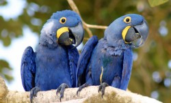 Birdwatching Brazil