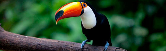 Brazil's Best Wildlife and Nature